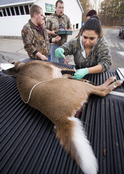 Sylvana Jaramillo, a Unity College wildlife and fisheries student, takes blood from a deer at the Freedom General Store tagging station on Saturday. She and four other Unity students were at the station as part of their studies.