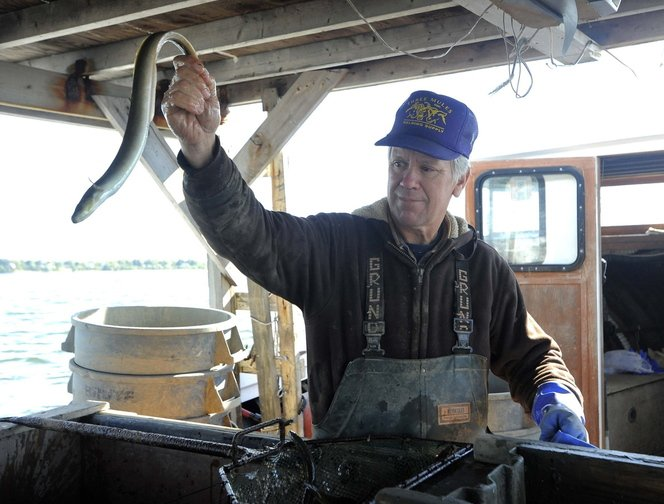 Jimmy Trossbach holds an eel he caught Oct. 24. He is one of few full-time eelers in Maryland.