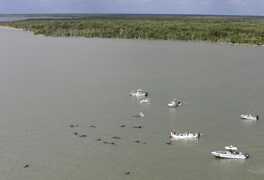 Officials in boats monitor the scene where dozens of pilot whales are stranded in shallow water in a remote area of Florida's Everglades National Park, Wednesday, Dec. 4, 2013.