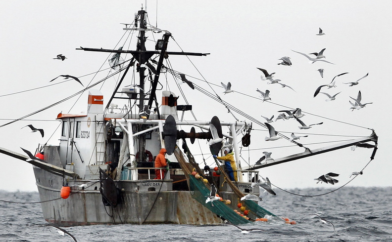 Gulls follow a shrimp fishing boat as crewmen haul in their catch in the Gulf of Maine in 2012. The Gulf of Maine shrimp population has fallen to the lowest level on record, setting the stage for a shutdown of the fishery this coming winter.