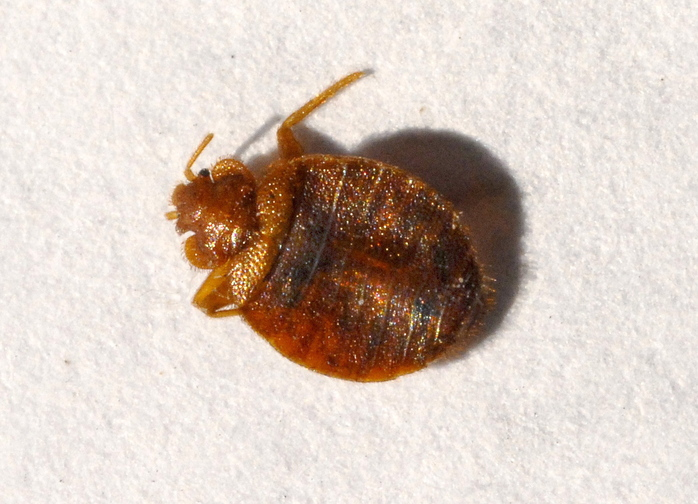 A new New Hampshire law aims to control bed bug infestations in rental housing.