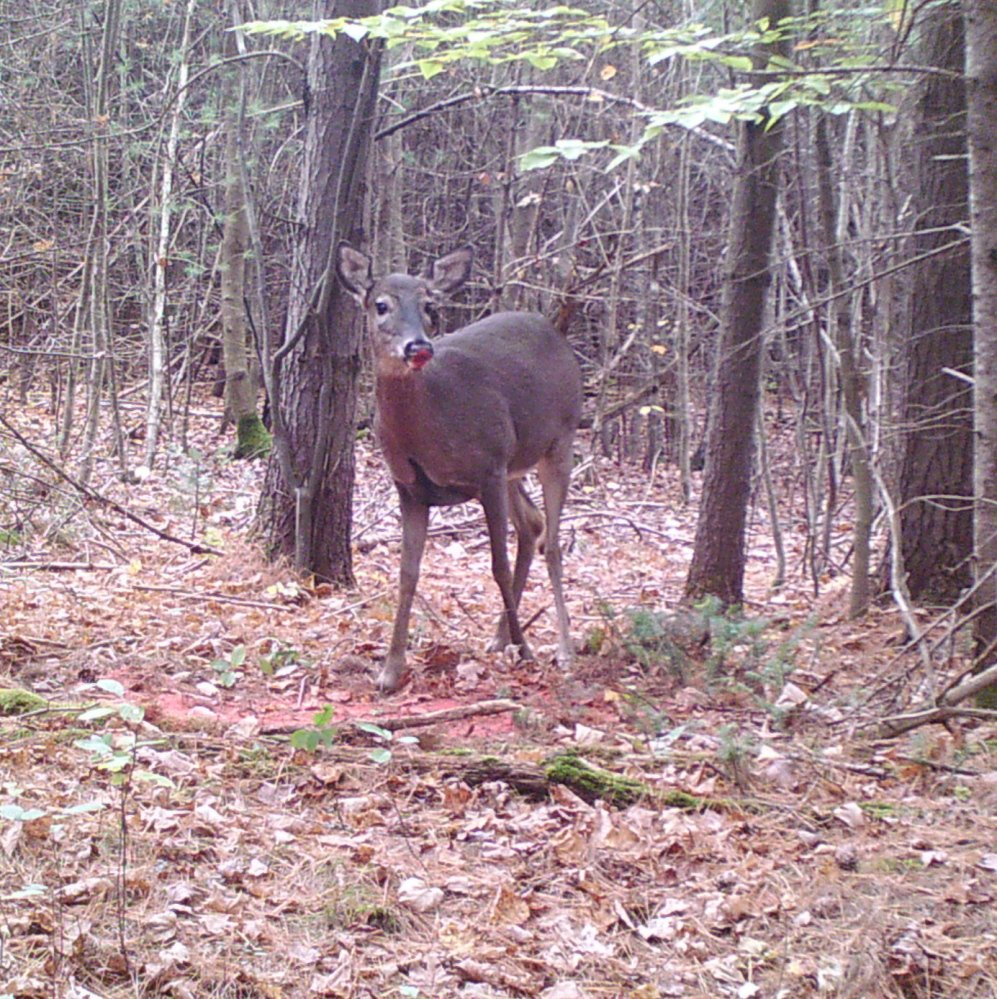 Gorham's Marshall Richardson says his cam reveals where the deer are, but not when they'll arrive.