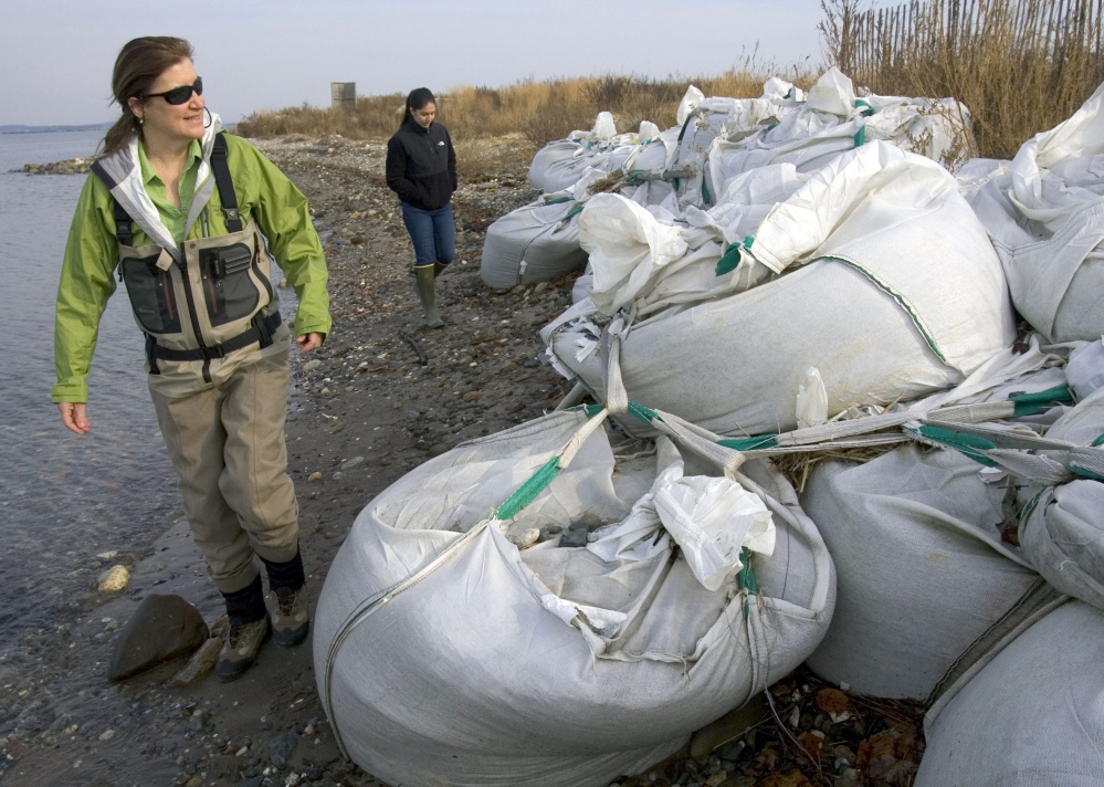 Jennifer Mattei, left, a professor at Sacred Heart University, and graduate student Lindsay Tomaszewski, rear, check on sand bags that are part of a shoreline restoration project at Stratford Point in Stratford, Conn. The university and the Connecticut Audubon Society are building an artificial reef near Stratford Point to slow erosion caused by storms and bring back a more natural habitat.