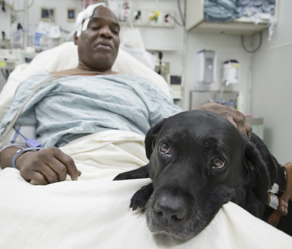 Cecil Williams pats his guide dog, Orlando, in his hospital bed following a fall Tuesday onto subway tracks in New York. Orlando tried to keep the blind 61-year-old from falling, then leaped to the tracks to keep him safe.