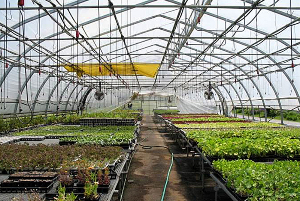 Inside one of the five greenhouses at Half Moon Gardens in Thorndike, which has been donated to nearby Unity College.
