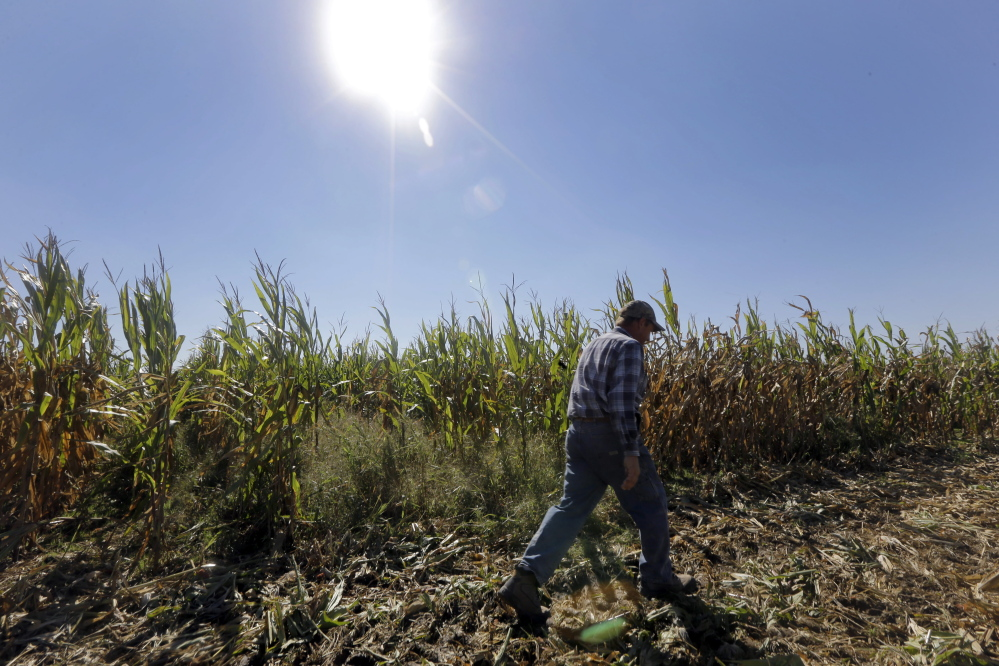 Larry Hasheider walks along one of his corn fields on his farm in Okawville, Ill. Hasheider grows soybeans, wheat and alfalfa on the farm, nestled in the heart of Illinois corn country. Most corn and soybeans grown in the U.S. are genetically engineered, usually with the Roundup resistant trait.