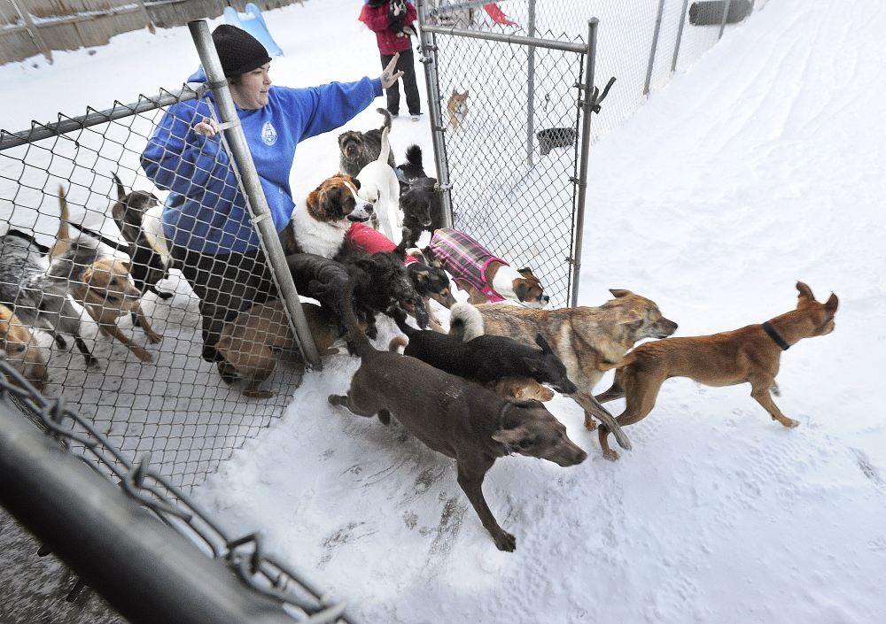 Kristi Moreau runs the Doggie Cottage dog day care business in Scarborough.