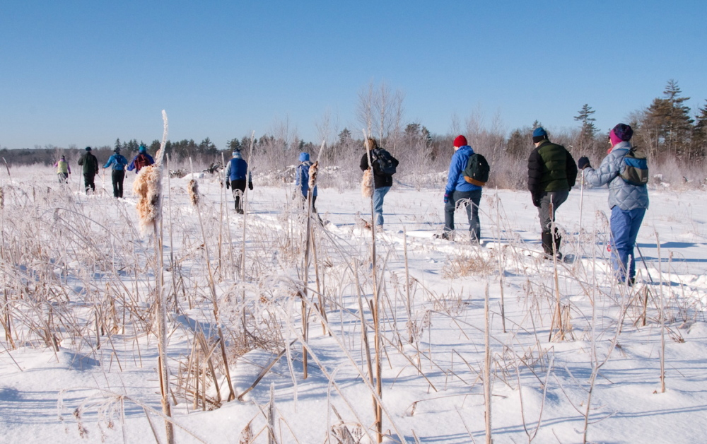 Snowshoers and skiers cross the winter expanse of Great Works Regional Land Trust's Tuckahoe Preserve in Berwick. Another hike to the property is planned Saturday.