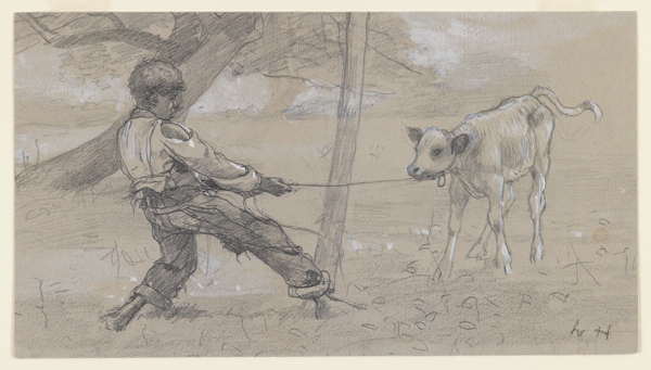 "Study for ""The Unruly Calf"" by Winslow Homer, 1875-76."