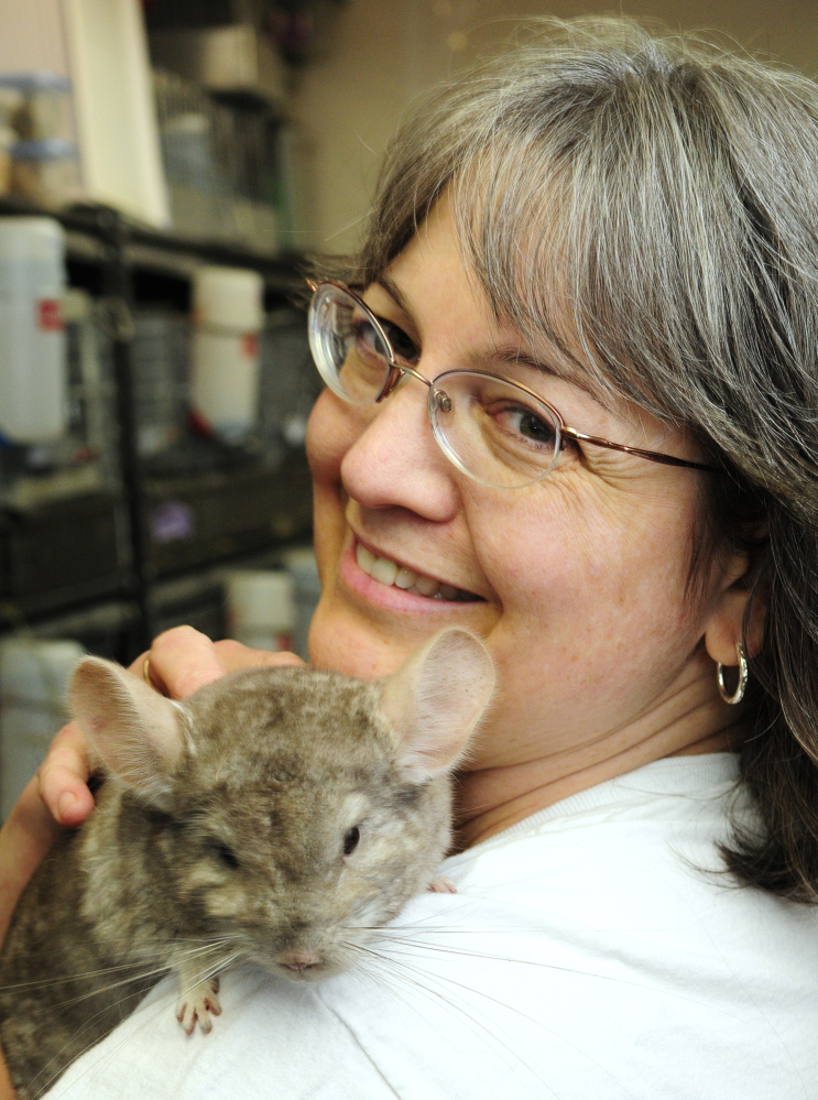 Chinchilla breeder Marianne Sansouci poses with one of her healthy chinchillas Friday at her Augusta home.
