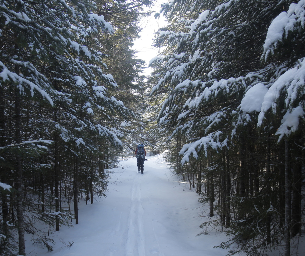 A stand of pines creates a scenic snow-encrusted corridor at the Little Lyford Pond Camps site.