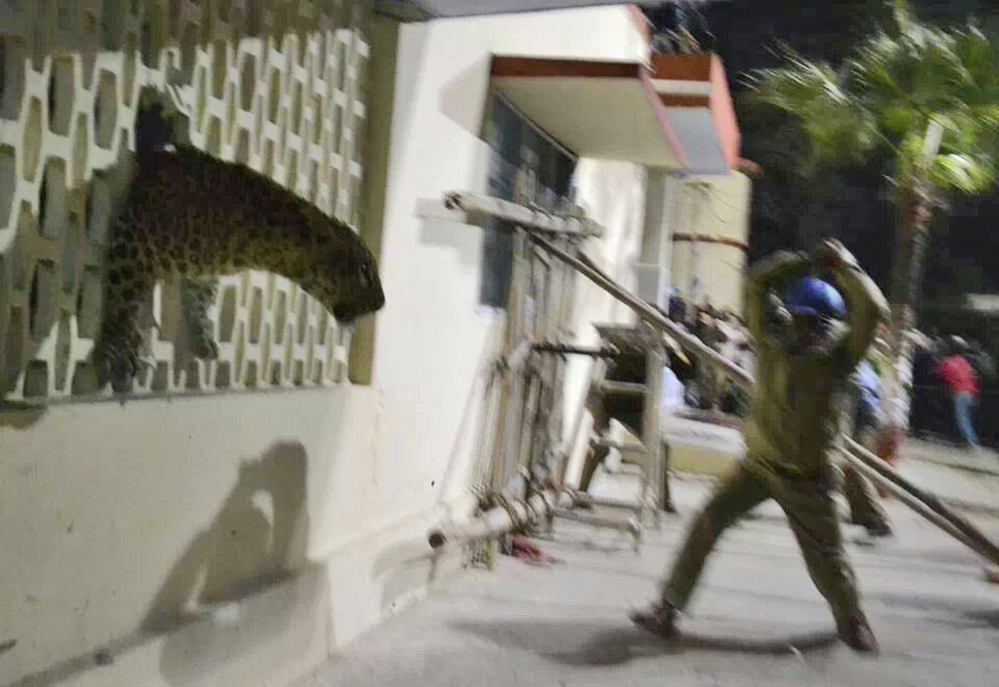 In this cellphone photo, a policeman tries to charge a leopard with a stick that was spotted at a hospital in Meerut, India.
