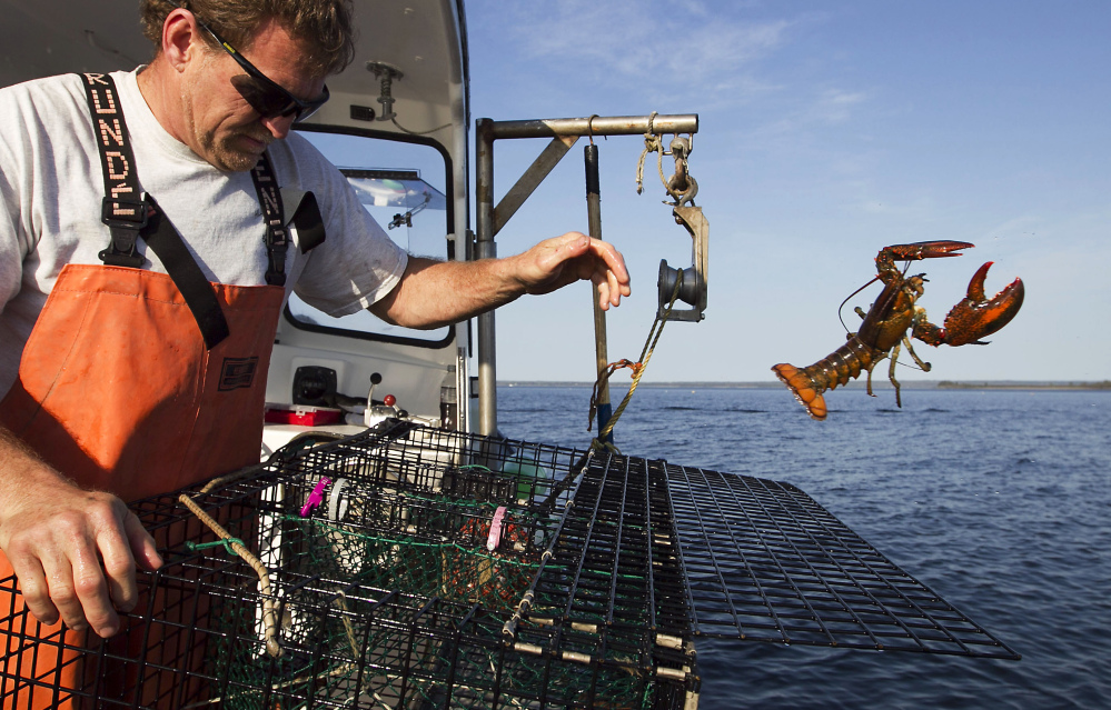 Sternman Scott Beede tosses an undersized lobster while checking traps off Mount Desert, Maine. The state's lobster catch brought in a record $364.5 million in 2013, according to preliminary figures.