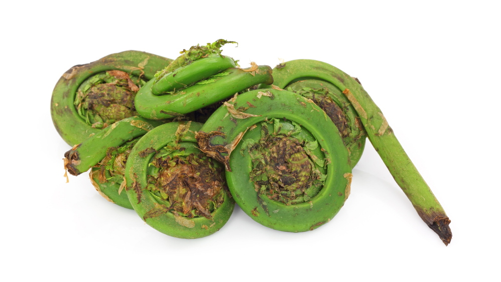 Fern stuff: Fiddleheads are the shooting stars on spring menus ... at your favorite restaurant or your own kitchen.