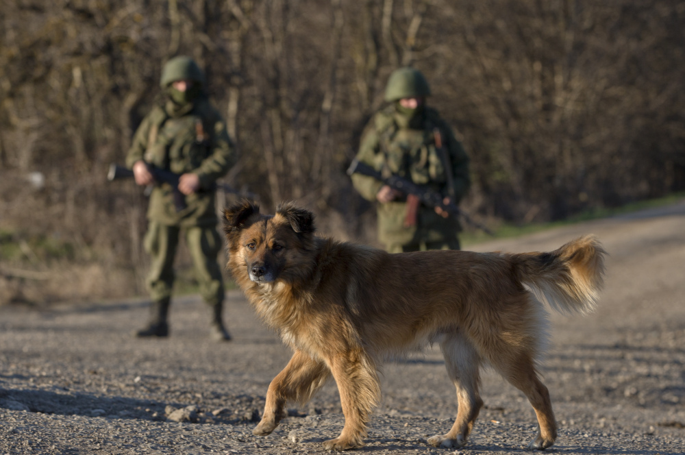 A dog walks past Russian soldiers outside a Ukrainian infantry base in Perevalne. Thousands of troops and equipment are at the Ukraine border as part of a training exercise.