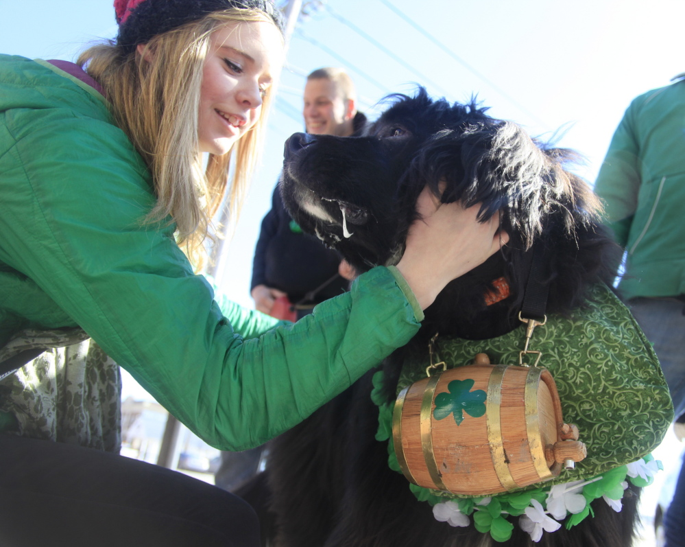 Kodie Chontos, 14, of Portland says hello to Bubba, a 4-year-old, keg-toting Newfoundland owned by Jane Grabler of South Portland.
