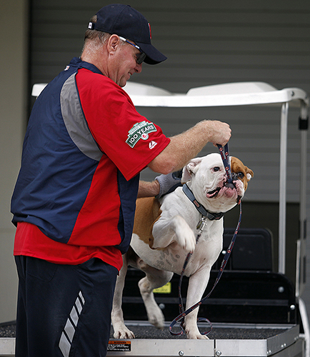 Also bullish on the Red Sox is Homer the young bulldog, who has the role of team mascot. Like the players, Homer is affable as he plays with clubhouse attendant Richard Bryce, who hails from the Maine town of Hermon, near Bangor.