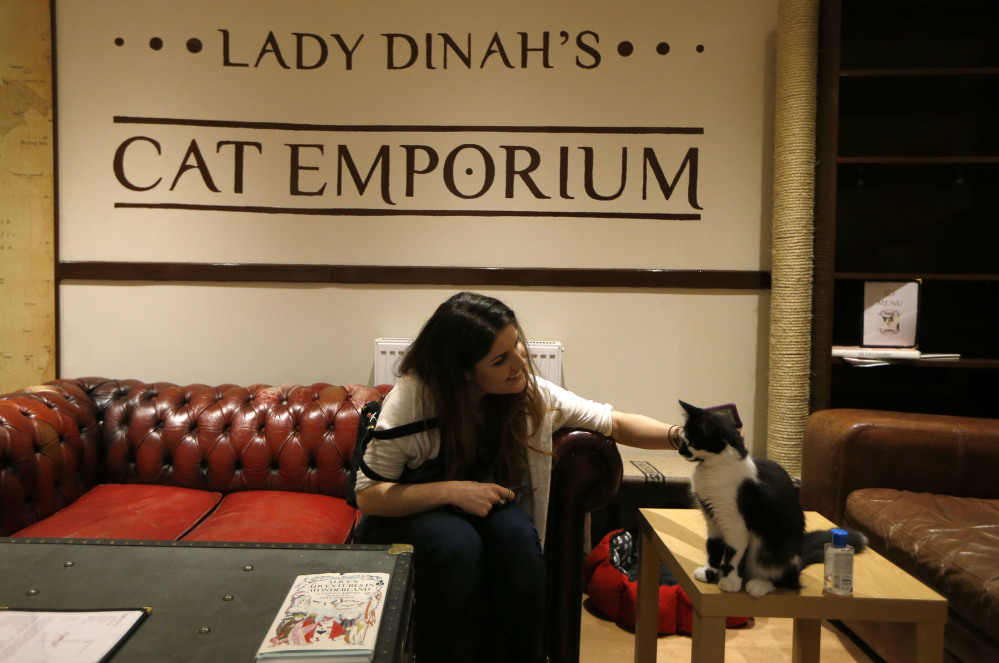 A visitor strokes a cat in the newly opened Lady Dinah's Cat Emporium in London. Feline company is exactly what the cafe is offering and stressed-out city-dwellers are lapping it up.