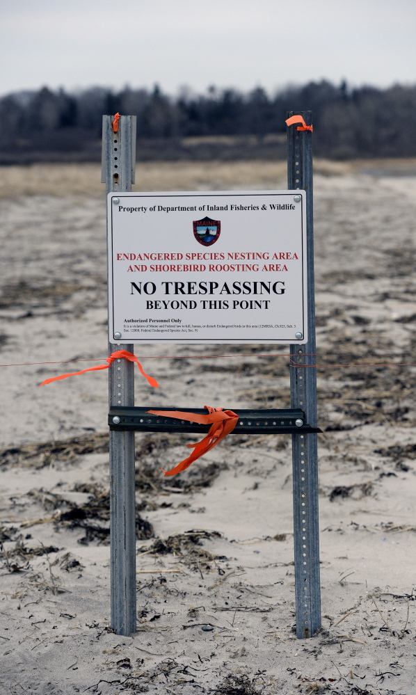Shorebirds can rule the roost as the state closed off three acres of Higgins Beach to protect piping plovers.