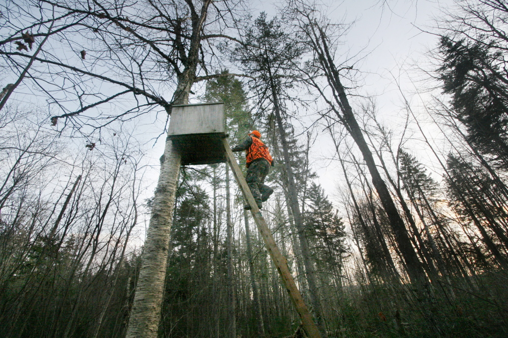 Bob Lowell climbs into a tree stand near Moose-Valley-Camp in November 2007 to watch his brother David stalking deer. This year the Maine will issue 10,000 fewer any-deer permits as it tries to rebuild the deer population up north.