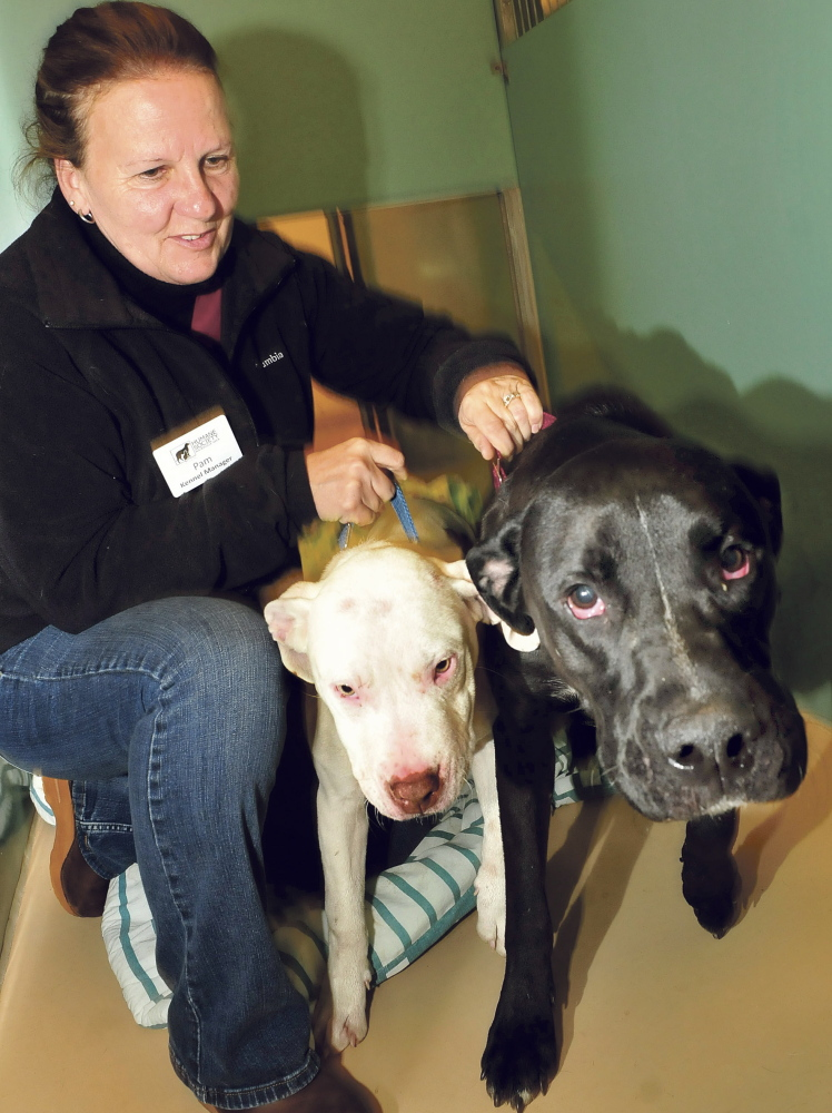 Kennel manager Pam Nichols restrains Buddy and Magnum, who were abandoned outside the Humane Society Waterville Area shelter. Both dogs' mouths were filled with porcupine quills when the staff found them shivering in the snow Wednesday morning.