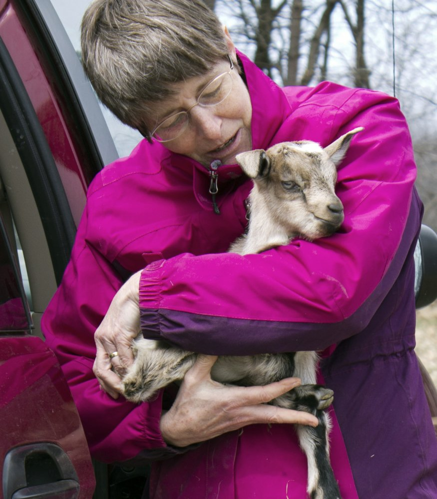 Karen Freudenberger takes a goat to the barn at the Vermont Goat Collaborative in Colchester, Vt. Freudenberger is helping refugees and immigrants raise goats.