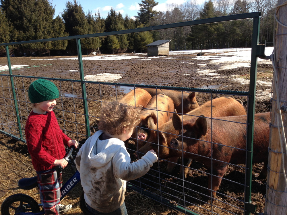 Writer Laura McCandlish's son, Theo, right, checks out the pigs at milkweed Farm with Daire Woodruff.