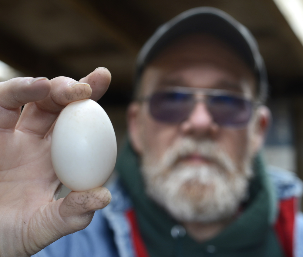 "Dan Smith raises ducks for their eggs at his farm in South Berwick. ""At the beginning there were not many customers,"" he said."