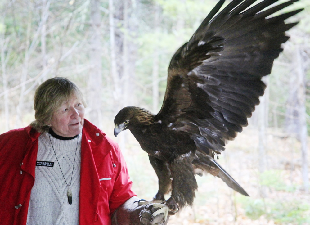 Hope Douglas of Wind Over Wings in Dresden holds Skywalker, a 22-year-old golden eagle, as he salutes a captive crowd during a live birds of prey presentation at Bradbury Mountain State Park in Pownal on Saturday as part of Feathers over Freeport, a weekend birdwatching event.