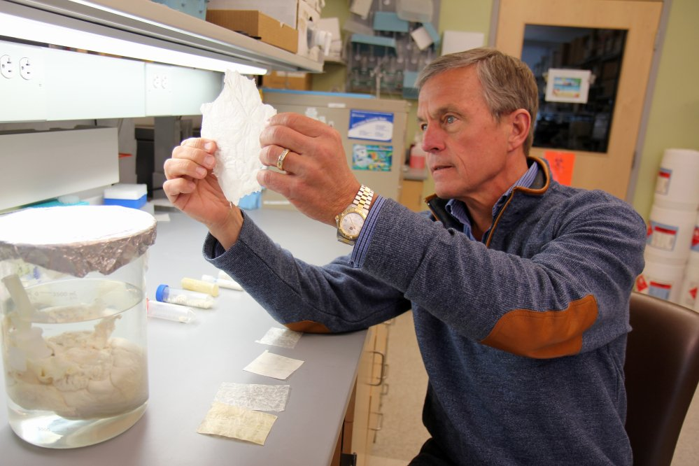 Dr. Stephen Badylak, a surgery professor at the University of Pittsburgh and deputy director of the McGowan Institute for Regenerative Medicine, holdings a sheet of scaffolding-like material derived from pig bladder. His team implanted a similar version into a handful of men with severe leg injuries and reported Wednesday that the experimental treatment helped regrow muscle.