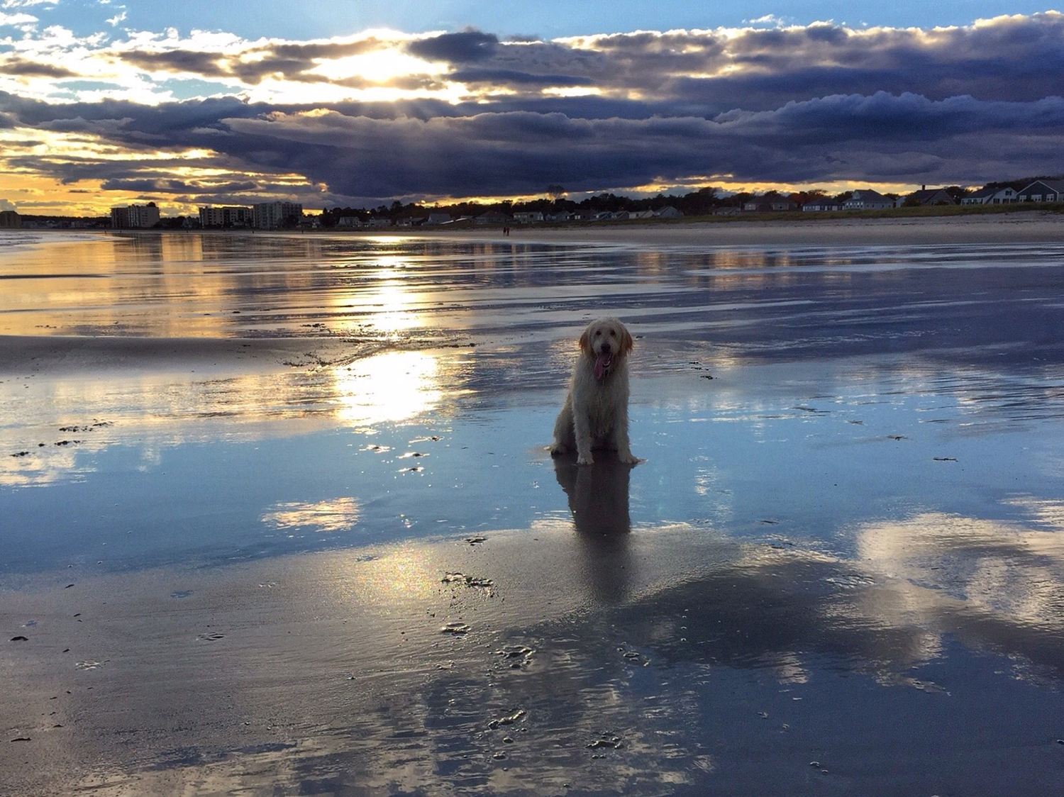 Don't let the sun go down on me, the dog seems to be singing to Carol Hill as late afternoon soon gives way to dusk at Pine Point in Scarborough.