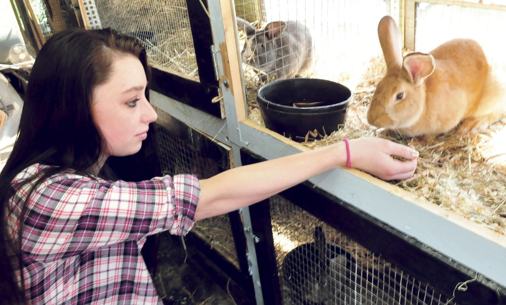 """Danika Andrews feeds a rabbit in the """"Bunny Bus."""" Marti Stevens students converted two donated school buses to house animals, and hope to add chickens, goats, sheep and ducks to their program."""