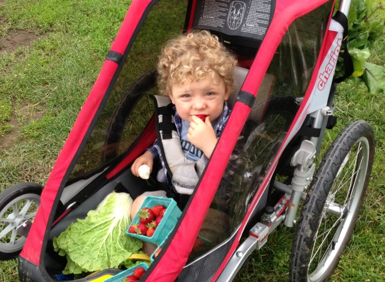 The author's son, Theo, enjoys pints of strawberries on a CSA pickup day at Crystal Spring Farm in Brunswick last June. Laura McCandlish photo