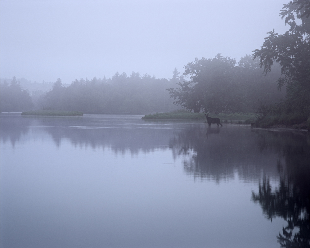 "Photos by Scot Miller, part of ""Thoreau's Maine Woods: A Journey in Photographs with Scot Miller"" at the Harvard Museum of Natural History"