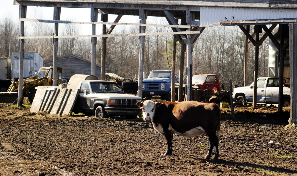Edward Munson's farm in Readfield has been home to 30 to 80 beef cattle in recent years. 2012 Kennebec Journal File Photo/Andy Molloy