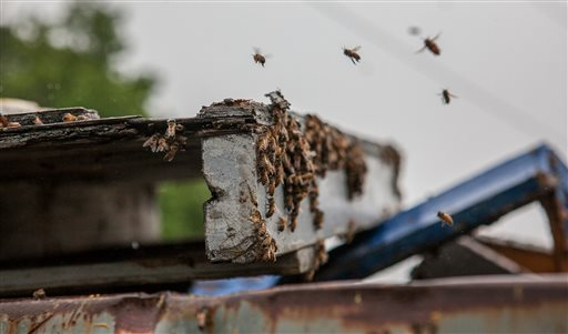 Bees fly over a dumpster Wednesday near the scene of a tractor-trailer rollover in Newark, Del. The ramp to Interstate 95 reopened Wednesday, more than 12 hours after the rig carrying an estimated 16 million to 20 million bees from Florida to Maine crashed Tuesday.