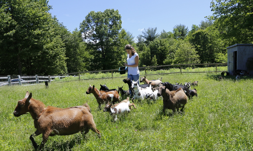 Lila Hall walks through a field with her family's goats. A video that she made with her sister, Tess, of the girls running with the baby goats has become an online sensation.