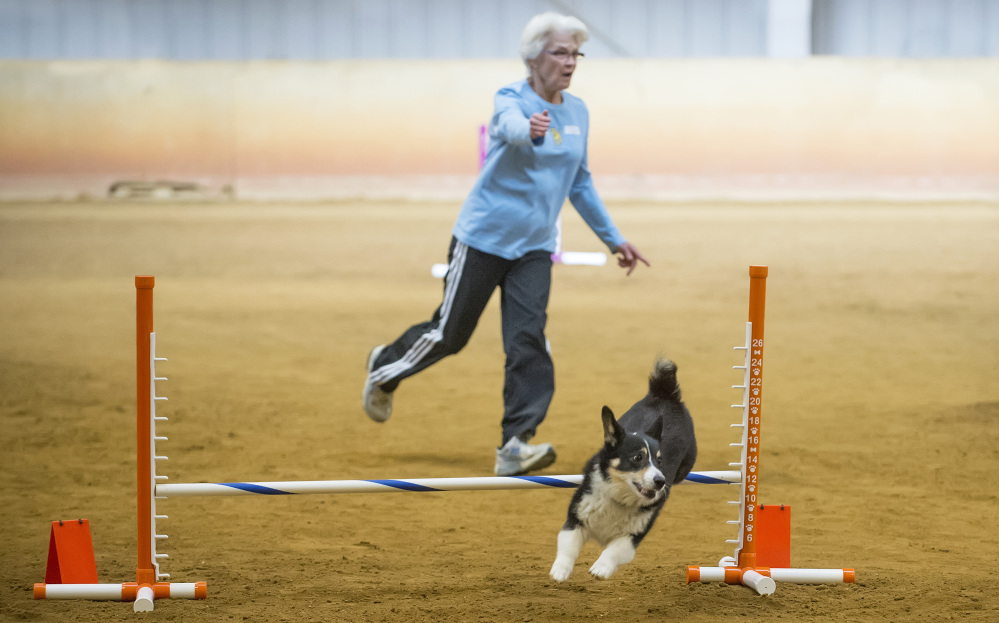 Gayle Lape runs an agility course with her dog.