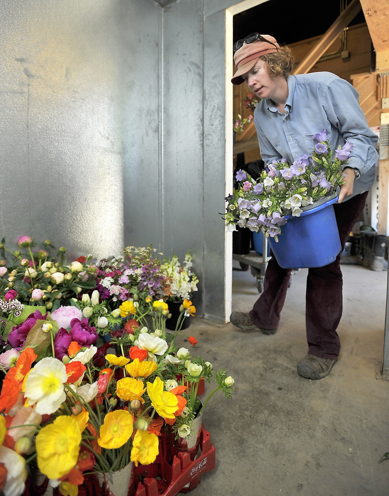 Carolyn Snell brings a bucket of freshly cut Campanula flowers into the cooler, set to 38-40 degrees, to help preserve them.
