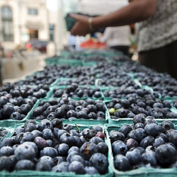 A shopper selects a quart of blueberries at the Portland Farmers' Market in Monument Square. Gabe Souza file photo