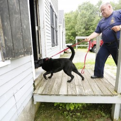 Arson dog Shasta, 6, a black Lab, leads Dan Young, the senior investigator for the Maine Fire Marshal's Office, into a home for training during the annual State Farm arson dog program recertification class at the Yarmouth Fire Department training facility Tuesday.