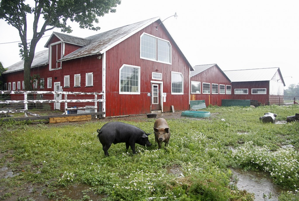 Small Vs. Large: Which Size Farm Is Better For The Planet