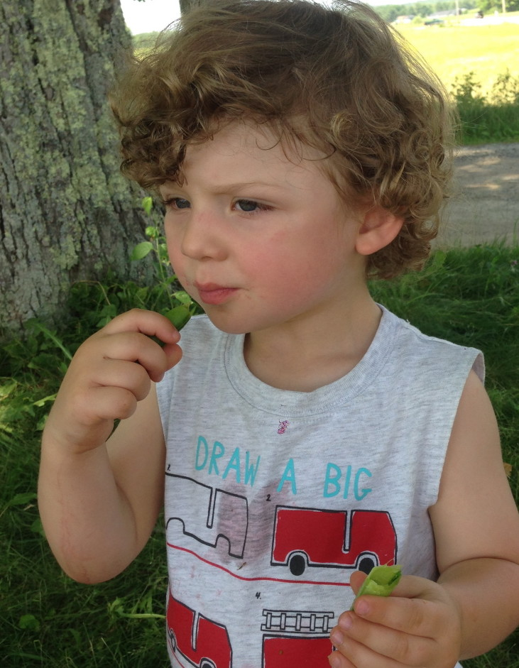 The author's son, Theo, snacks on shelling peas at a farmers market in Brunswick.