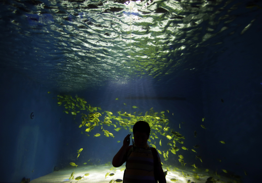 A visitor talks on a cellphone at an aquarium in Shanghai, China. A study released Thursday entailed leaving college students alone without cellphones and other distractions for six to 15 minutes. Results showed that many could not entertain themselves with their own thoughts.