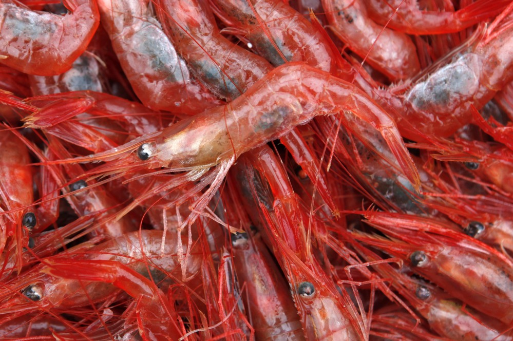 The Atlantic States Marine Fisheries Commission closed the shrimp season in 2014 for the first time in more than 30 years because shrimp populations dipped to their lowest recorded levels. The commission will keep the fishery closed in 2018.