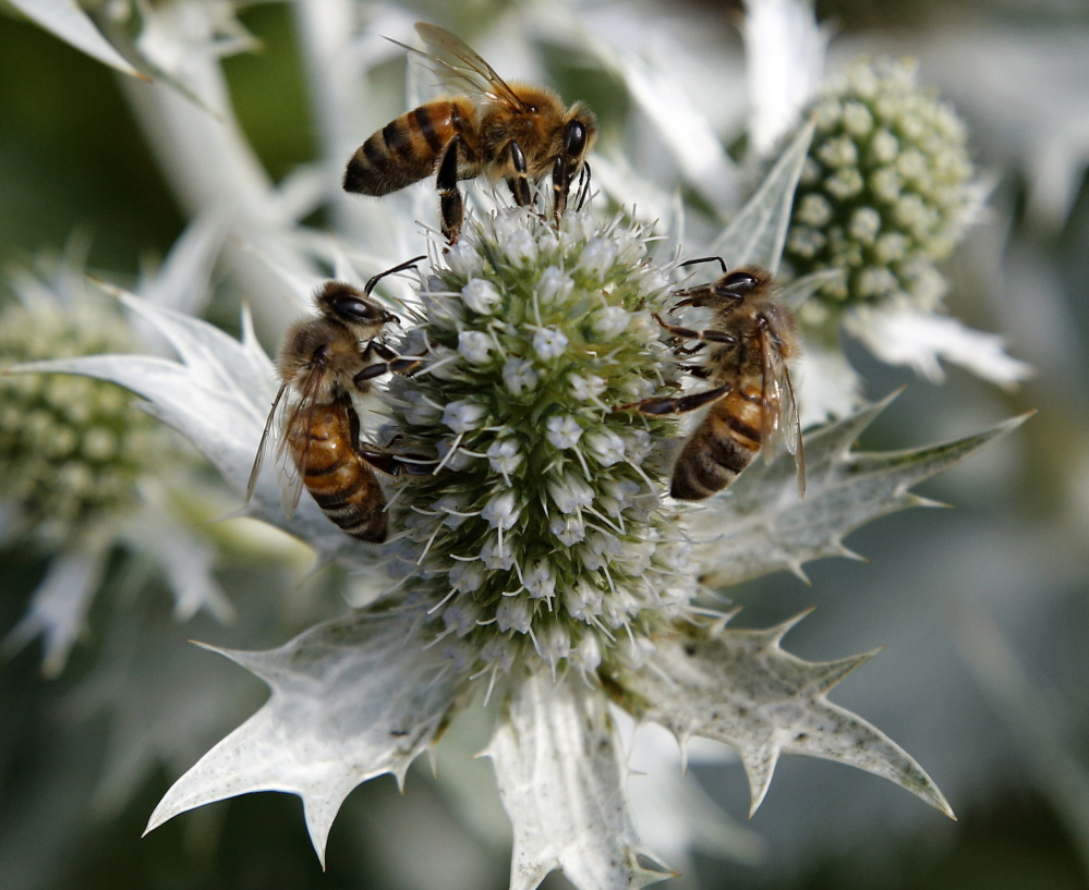 Neonicotinoid insecticides, which may be causing die-offs in various bee populations, may also be contributing to higher rates of death among birds, a Netherlands study says.