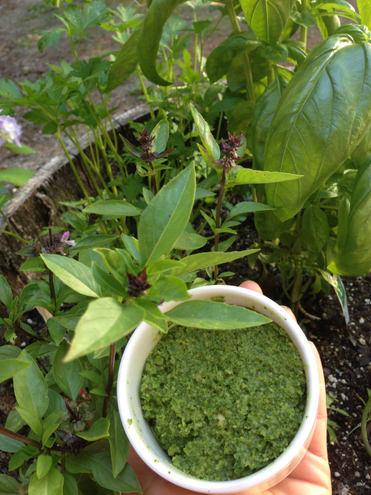 Thai basil beside a ramekin of the author's Thai basil pesto.