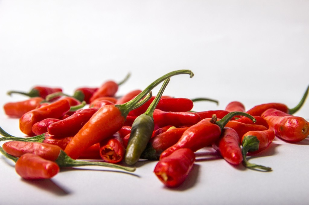 """UMaine's """"germplasm 509-45-1"""" peppers are very small, with each plant producing up to 1,000 peppers.  Courtesy of University of Maine"""