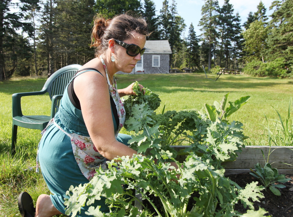 DIX ISLAND, ME Ð JULY 26: Reilly Harvey picks kale from her garden on Dix Island Saturday, July 26, 2014. Harvey runs Mainstay Provisions, selling lobster dinners, and baked good to boaters from her 1960s North Haven launch. (Photo by Joel Page/Staff Photographer)
