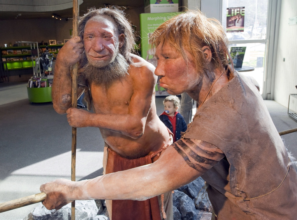 "Models of a Neanderthal man, left, and a homo neanderthalensis woman are displayed at the Neanderthal museum in Mettmann, Germany. Researchers say a ""robust"" timeline suggests that Neanderthals and humans coexisted in Europe for about 5,000 years, allowing ample time for the two species to meet and mix."